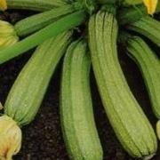 malattie zucchine