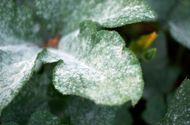 Zolfo pianta malattie