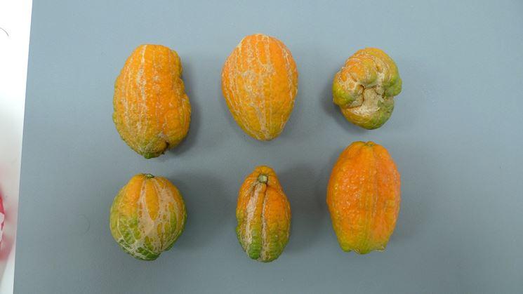 Frutti deformati