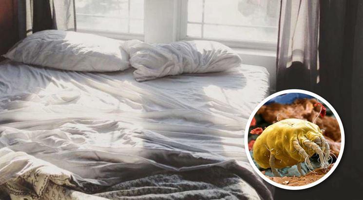 Acari parassiti delle piante parassiti piante - Parassiti del letto ...