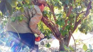 Come potare il limone potatura for Potatura limone periodo