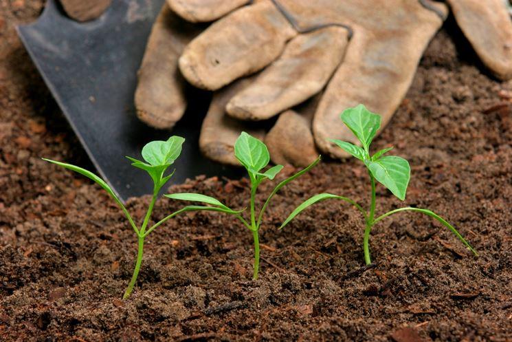 Cospargere fertilizzante