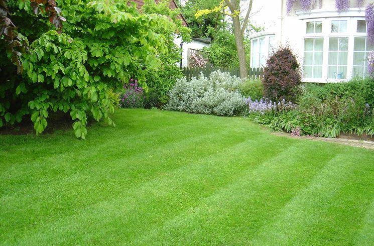 Erba per giardino prato curare il prato for Giardino rustico traliccio decorativo