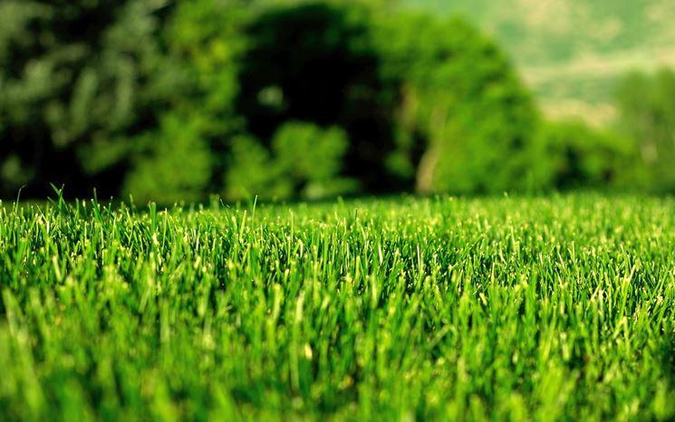 Erba per giardino prato curare il prato - Quando seminare erba giardino ...
