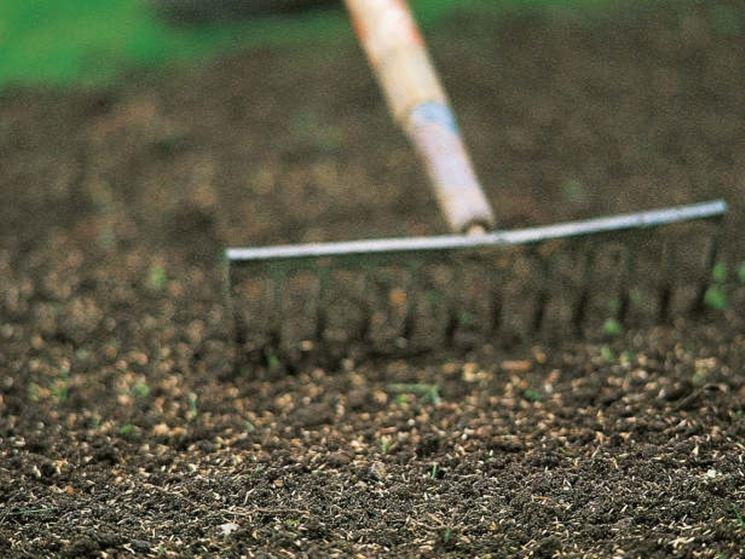 Prato fai da te prato coltivare il prato - Quando seminare erba giardino ...