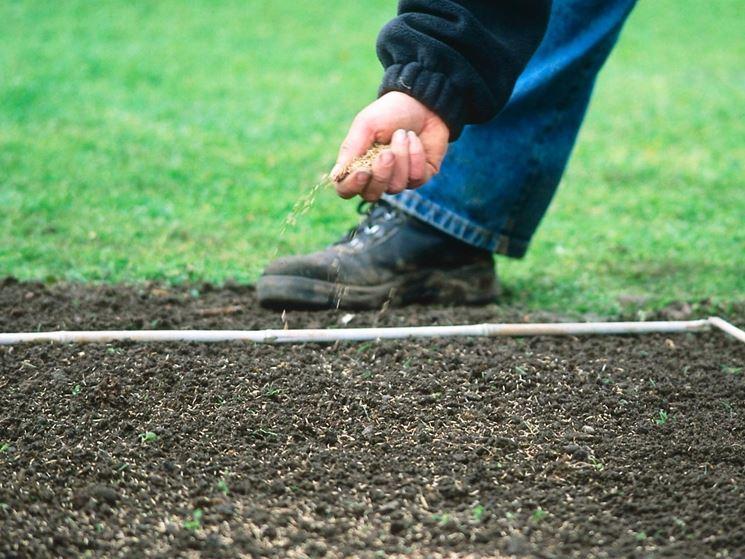 Как засеять газон на даче своими руками 595