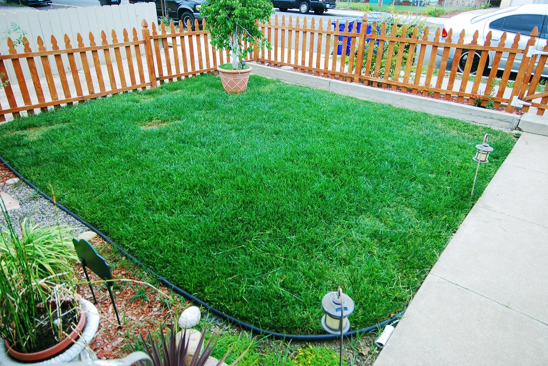 Eliminare la gramigna in giardino domande e risposte for Prato gramignone