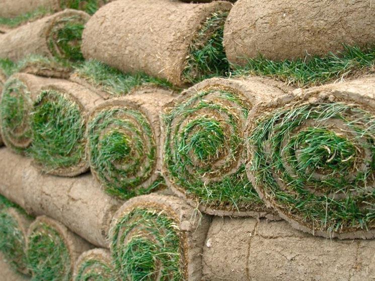 Prezzi prato a rotoli prato erba a rotoli for Tappeto erboso prezzi