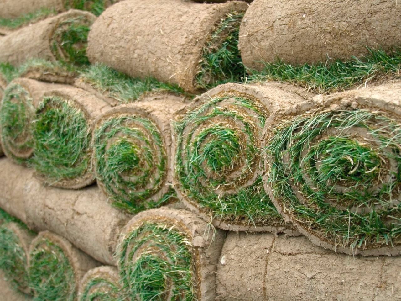 tappeto erboso prezzi