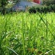 semi erba