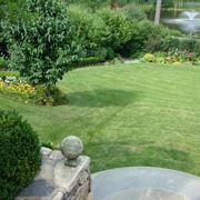 erba da giardino