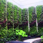 Nuove tendenze: il giardino verticale