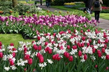 bordature giardino