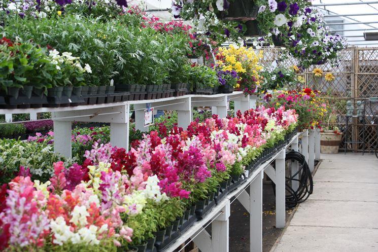 Un centro di giardinaggio