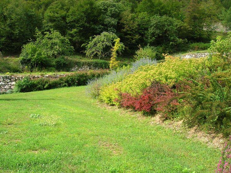 Un giardino con piante odorose al proprio interno