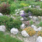 Giardini rocciosi progettazione giardini giardini - Costruire giardino roccioso ...