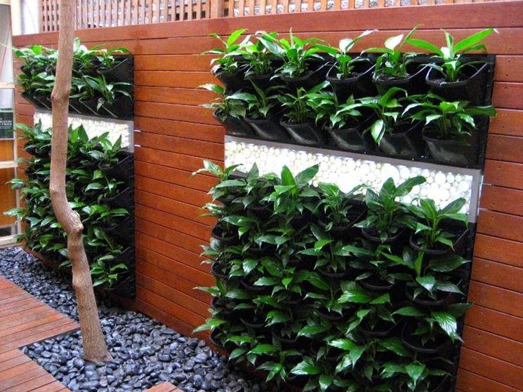 giardini verticali realizzazione - progettazione giardini - come ... - Piante Per Giardini Verticali