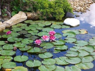 Giardino con acqua progettazione giardini for Pesci da laghetto mangia zanzare