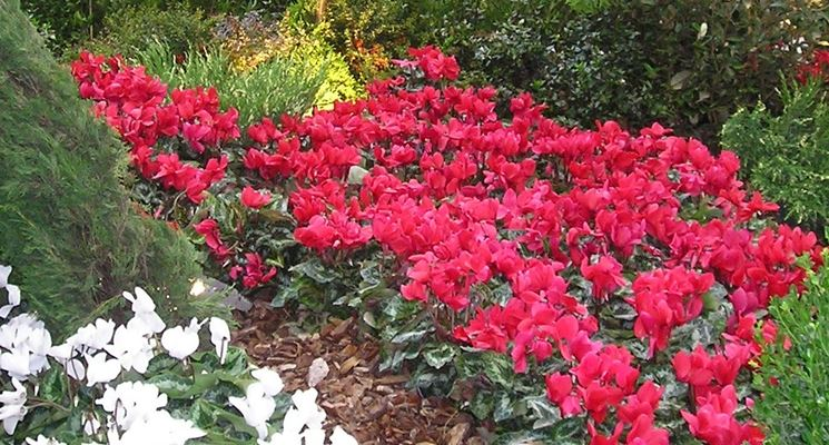 Affidarsi ai rivenditori online se si vuole una straordinaria varietà di fiori