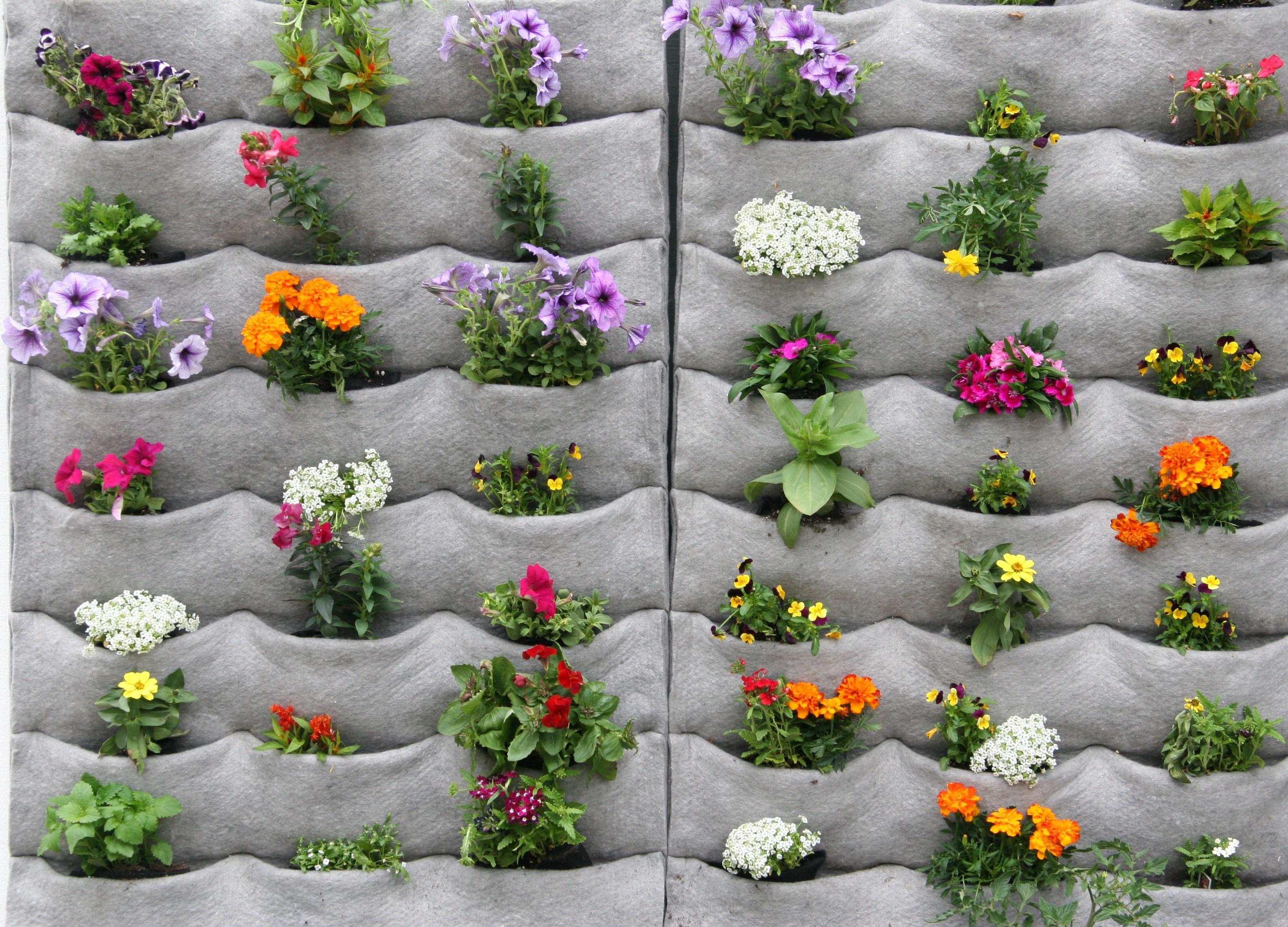 Giardini Verticali Fai Da Te building a garden wall ideas photograph | giardino verticale