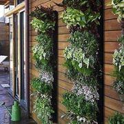 giardino verticale fai da te