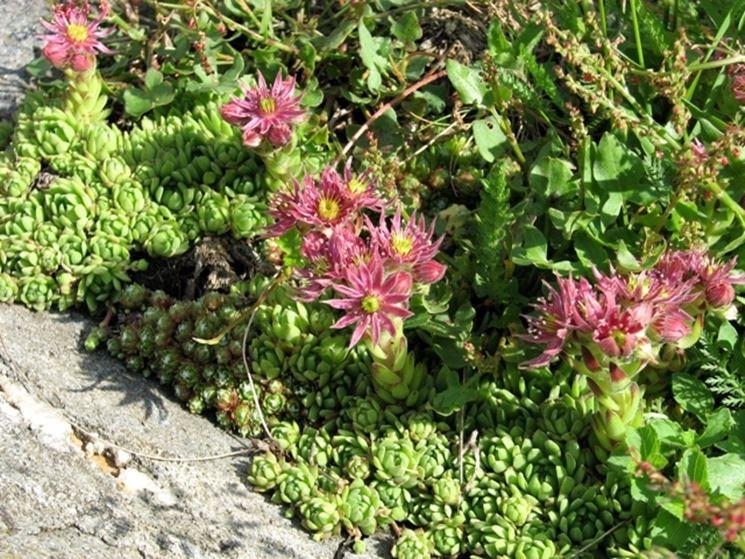 Progettare un piccolo giardino stunning simple come - Progettare un piccolo giardino ...