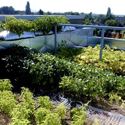 progettazione giardini pensili - progettazione giardini