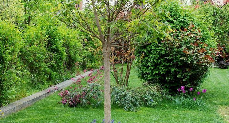 Realizzare giardini progettazione giardini come - Piccole aiuole da giardino ...