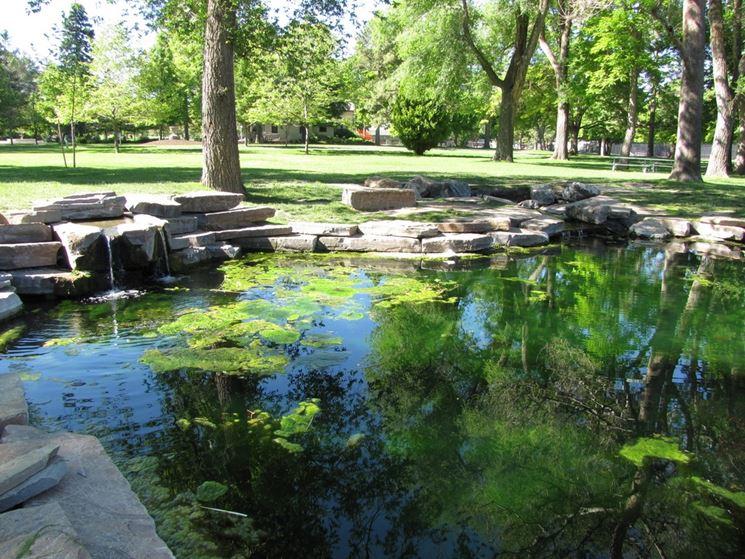 Stagno progettazione giardini laghetto giardino for Filtro per stagno