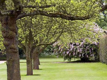 Giardino con alberi a crescita rapida