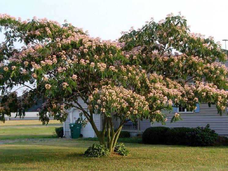 alberi crescita veloce giardini idee sogno immagine spaziale
