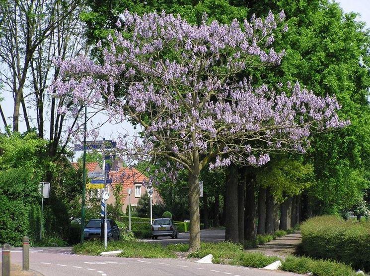 Alberi a crescita rapida alberi scopriamo gli alberi a - Piccoli alberi da giardino ...