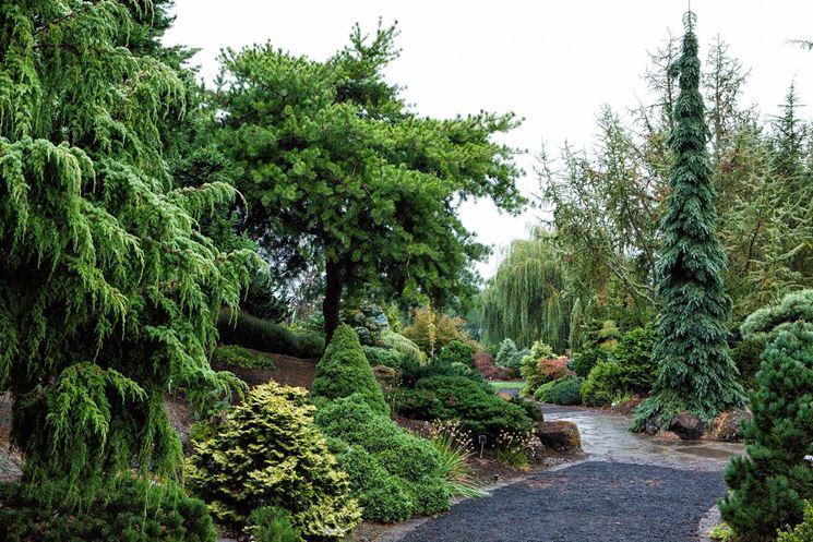 Alberi a crescita rapida alberi scopriamo gli alberi a - Alberi da piantare in giardino ...