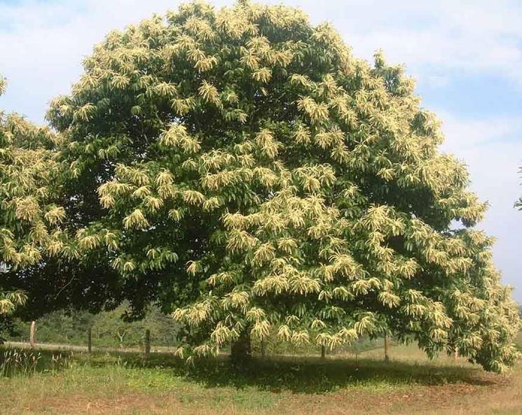 alberi caducifoglie alberi cartteristiche alberi