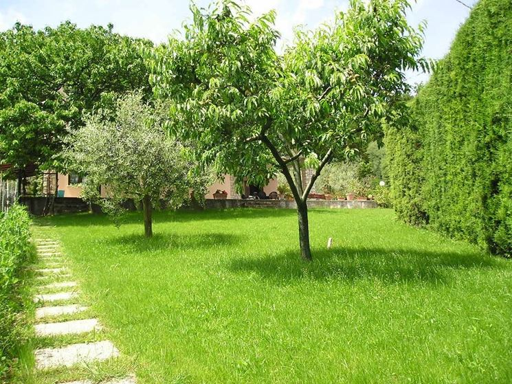 Alberi da ombra alberi scegliere gli alberi da ombra - Alberi sempreverdi da giardino ...