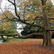 Un albero gigantesco
