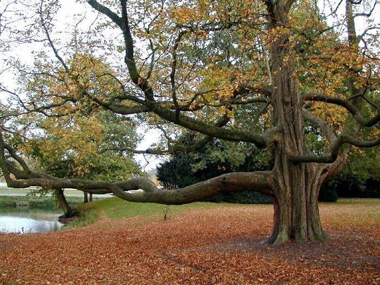 Alberi di alto fusto alberi alberi ad alto fusto - Piante alto fusto da giardino ...