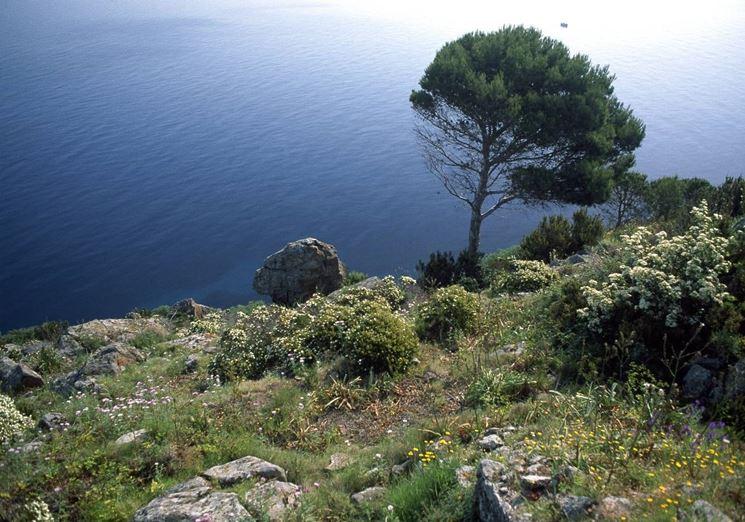 Tipica vegetazione mediterranea
