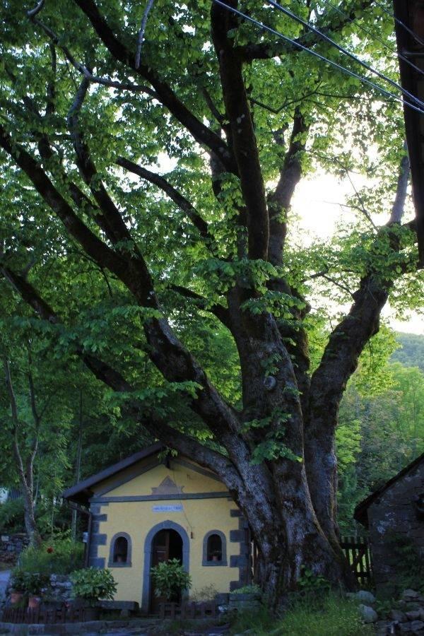 Alberi monumentali alberi caratteristiche degli alberi - Alberi giardino piccolo ...