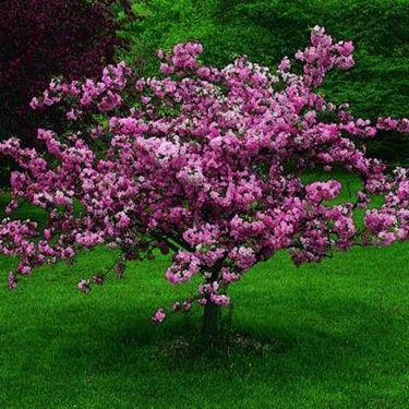 A ogni albero il suo spazio