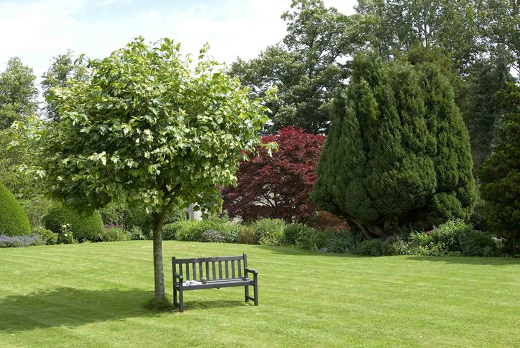 Alberi ornamentali alberi alberi per ornamento - Alberi da giardino sempreverdi ...