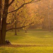 Sotto gli alberi del giardino