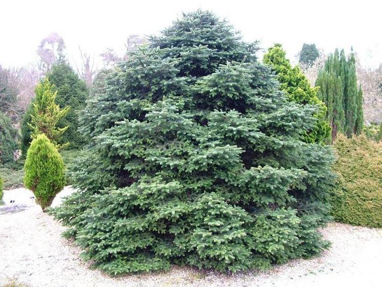 Alberi per giardino alberi come scegliere gli alberi - Alberi sempreverdi da giardino ...