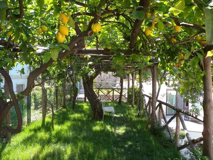 Alberi per giardino alberi come scegliere gli alberi - Alberi frutto giardino ...