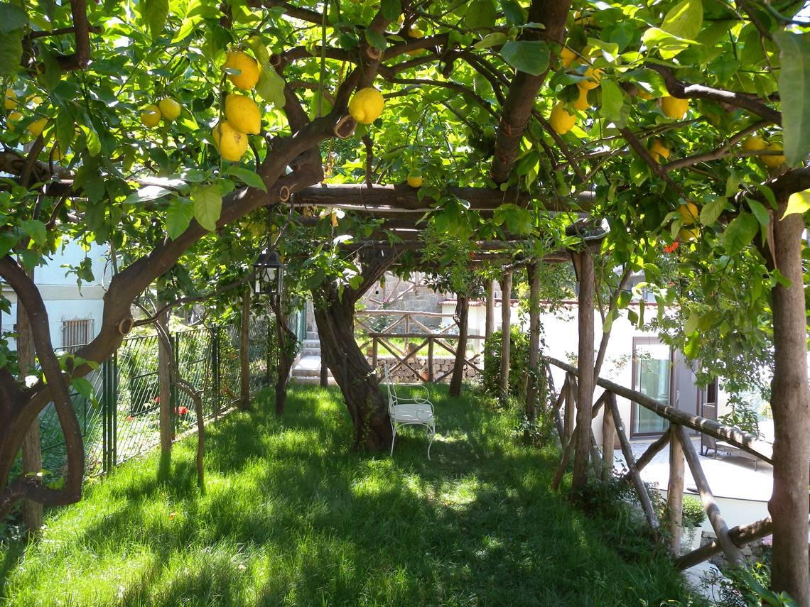 Alberi per giardino alberi come scegliere gli alberi per il tuo giardino - Alberi ornamentali per giardino ...