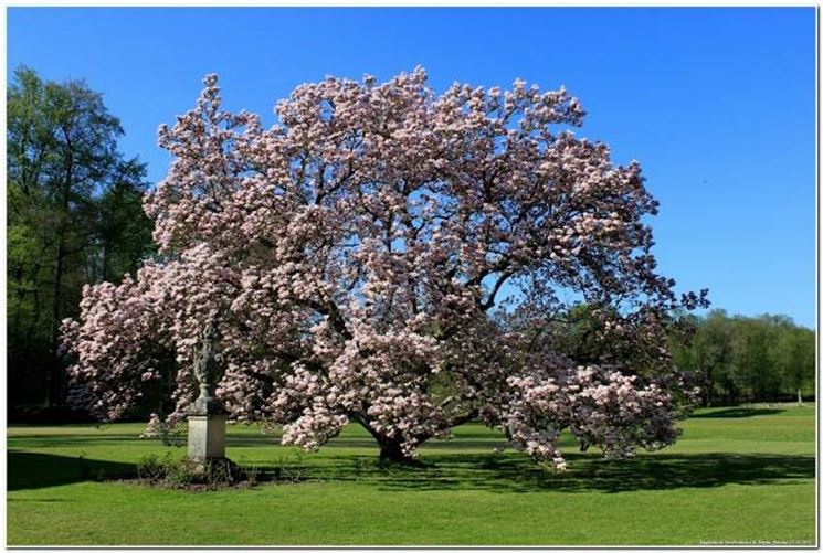 Alberi sempreverdi da giardino alberi sempreverdi per - Alberi particolari da giardino ...