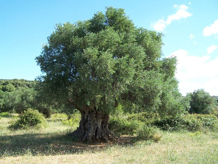Alberi sempreverdi da giardino alberi sempreverdi per - Nomi di piante da giardino ...