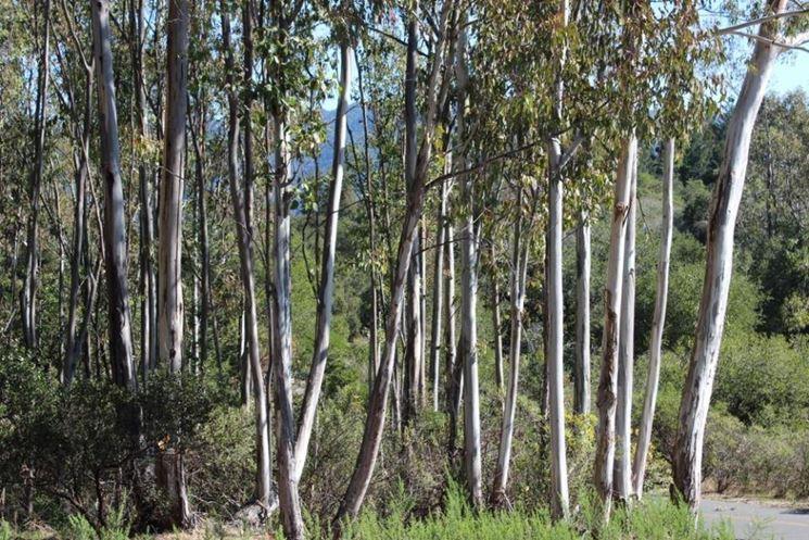 Alberi sempreverdi da giardino alberi sempreverdi per - Alberi da giardino di piccole dimensioni ...