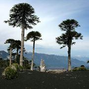 alberi sempreverdi da giardino