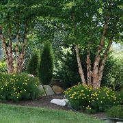 Alberi sempreverdi da giardino alberi sempreverdi per - Grandi alberi da giardino ...